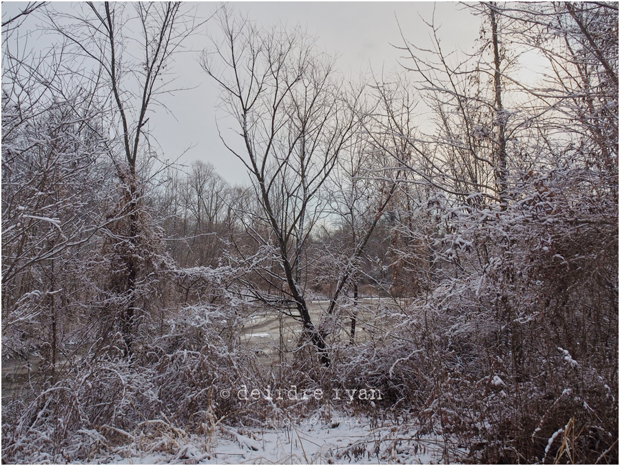 Black's Creek,Bordentown,NJ,Winter,2018,ice,snow,winter lace,Deirdre Ryan Editorial and Commercial Photography,New Jersey,Olympus OM-D E-M5 Mark II,Olympus 14-150mm f4-5.6 II Weather Sealed (Micro Four Thirds),lens,