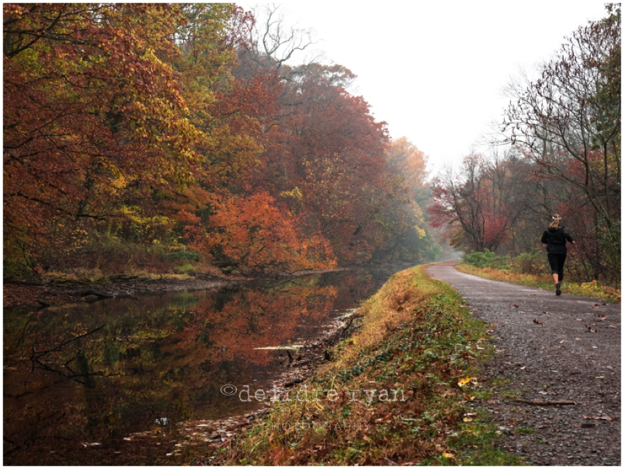 Delaware Canal,Olympus OM-D E-M5 MARK II,PA,Photo By Deirdre Ryan Photography www.deirdreryanphotography.com,autumn,fall,foliage,mirrorless camera,path,trees,